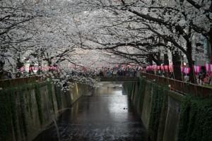 Ohanami - Nakameguro