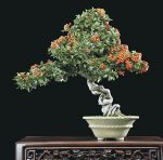 Le bonsaï et l'esprit du zen