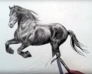 Dessiner un cheval par Leonardo Pereznieto