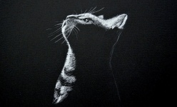 Chat fond noir - Leonardo Pereznieto